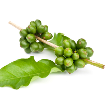 Dr Oz Green Coffee Bean Extract: Scam? READ BEFORE BUYING GREEN BEANS!