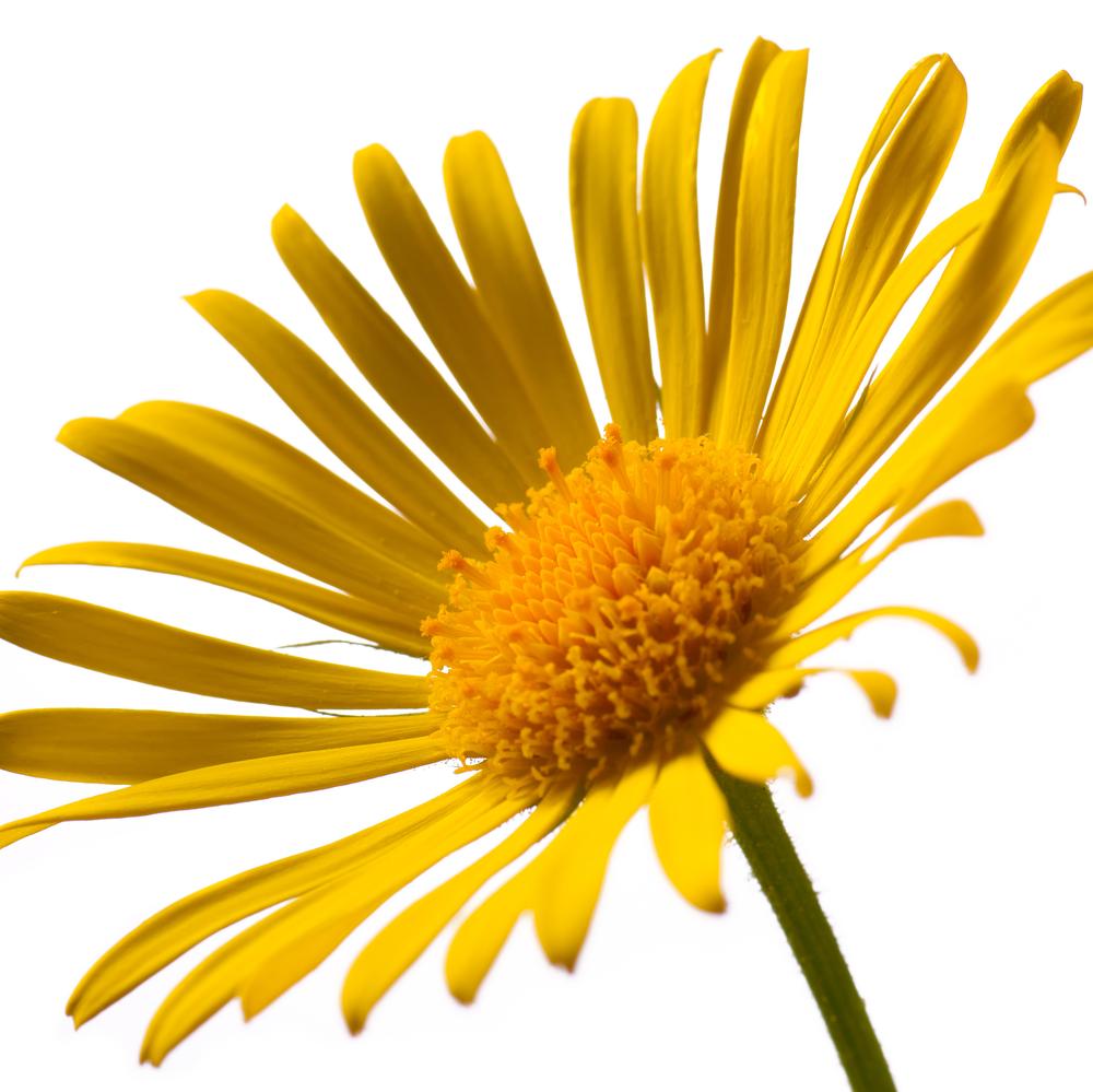Dr Oz Pain Relief: Arnica Supplement & Cream + Capsaicin Nasal Spray